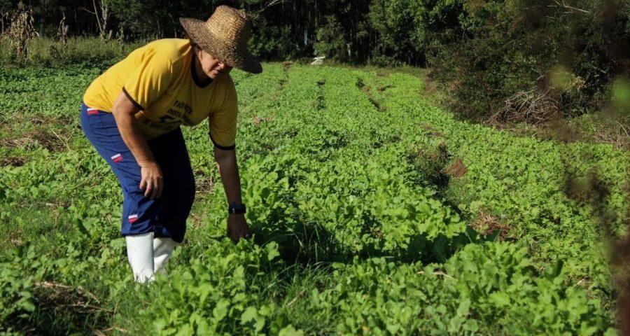 Depois da luta pela terra, trabalhar com orgânicos foi uma conquista para Gorete | Foto: Yamini Benites