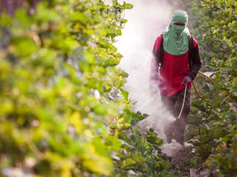 De abelhas a trabalhadores: o ciclo de morte gerado pelos agrotóxicos - Carta Capital
